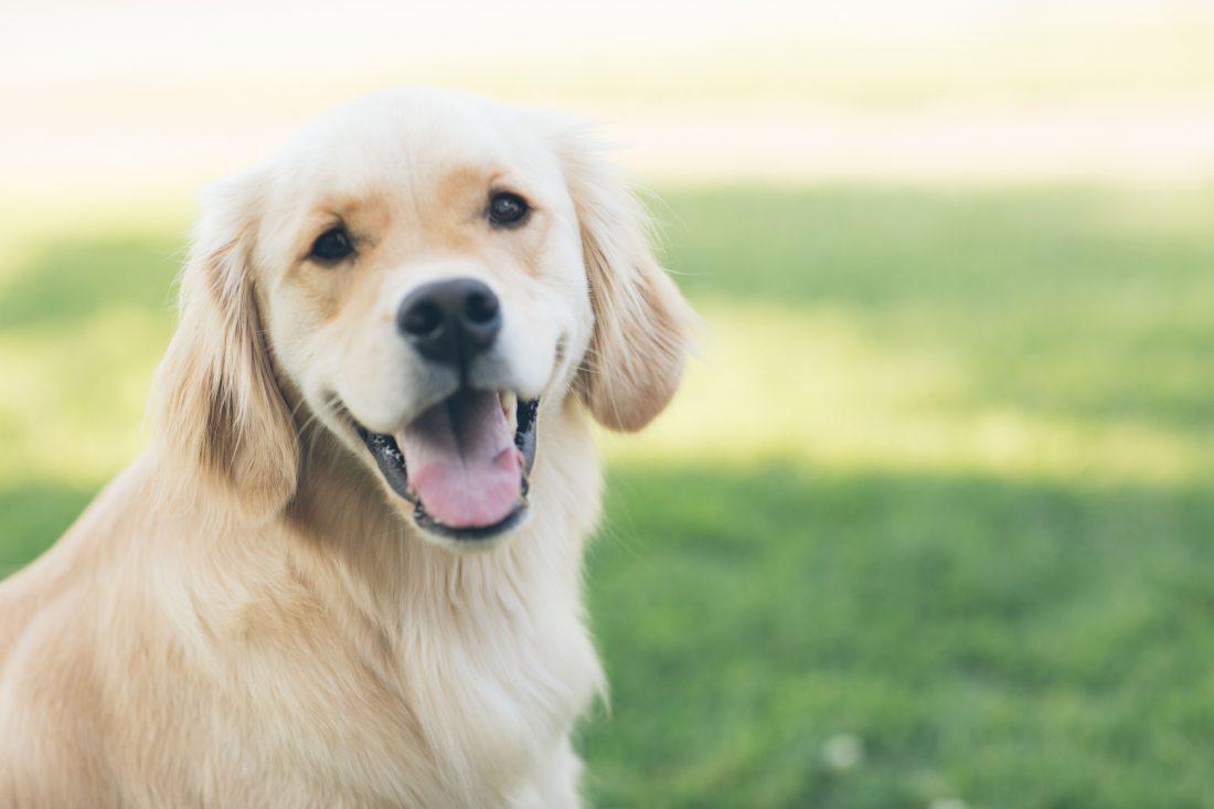 Adopter un chien les coussinets