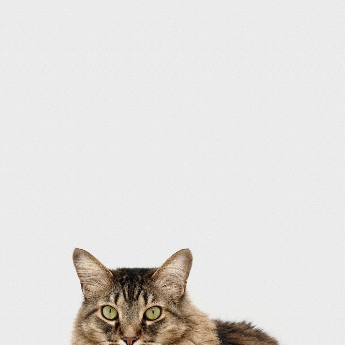 leucose chat les coussinets