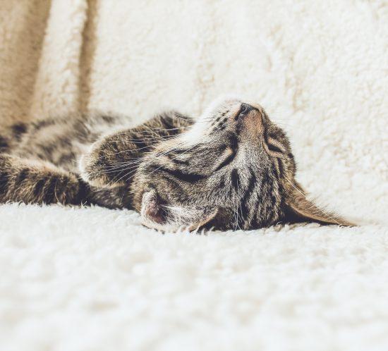 dépression chat les coussinets