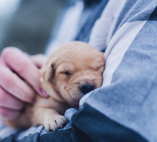 féliciter un chien