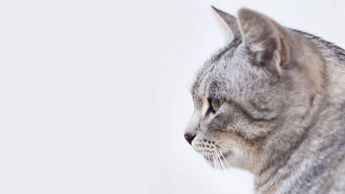 sida chat les coussinets