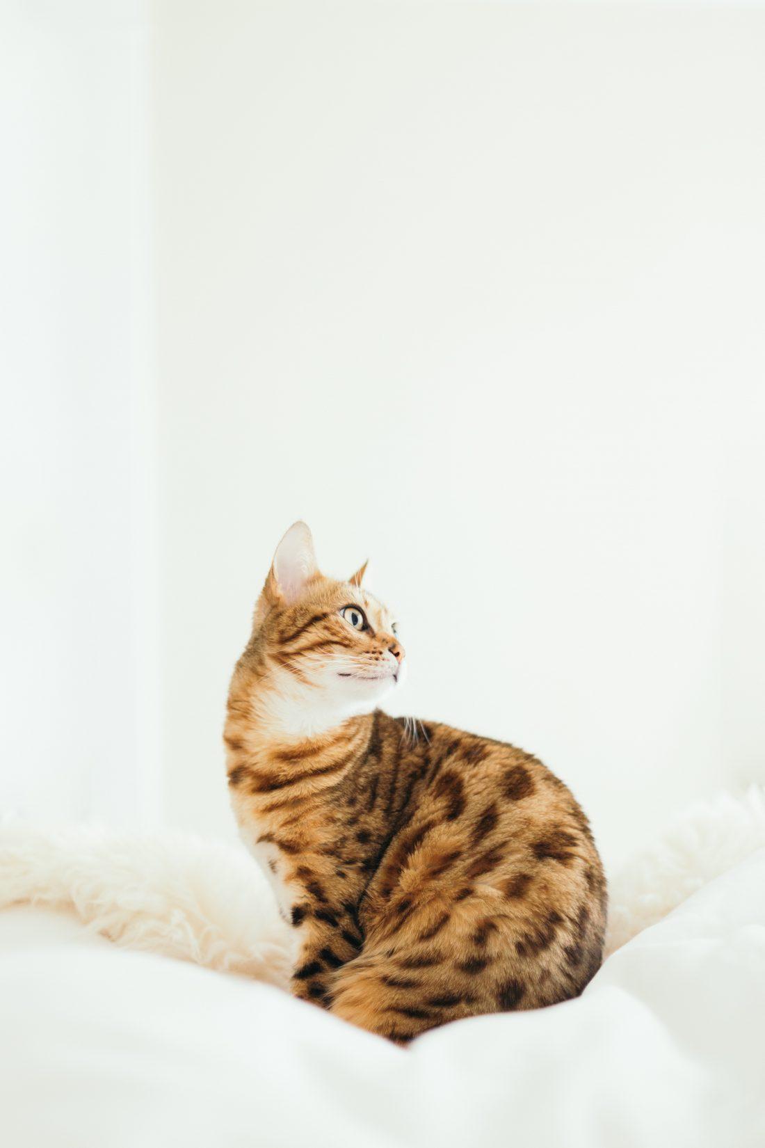 ronronnement chat les coussinets