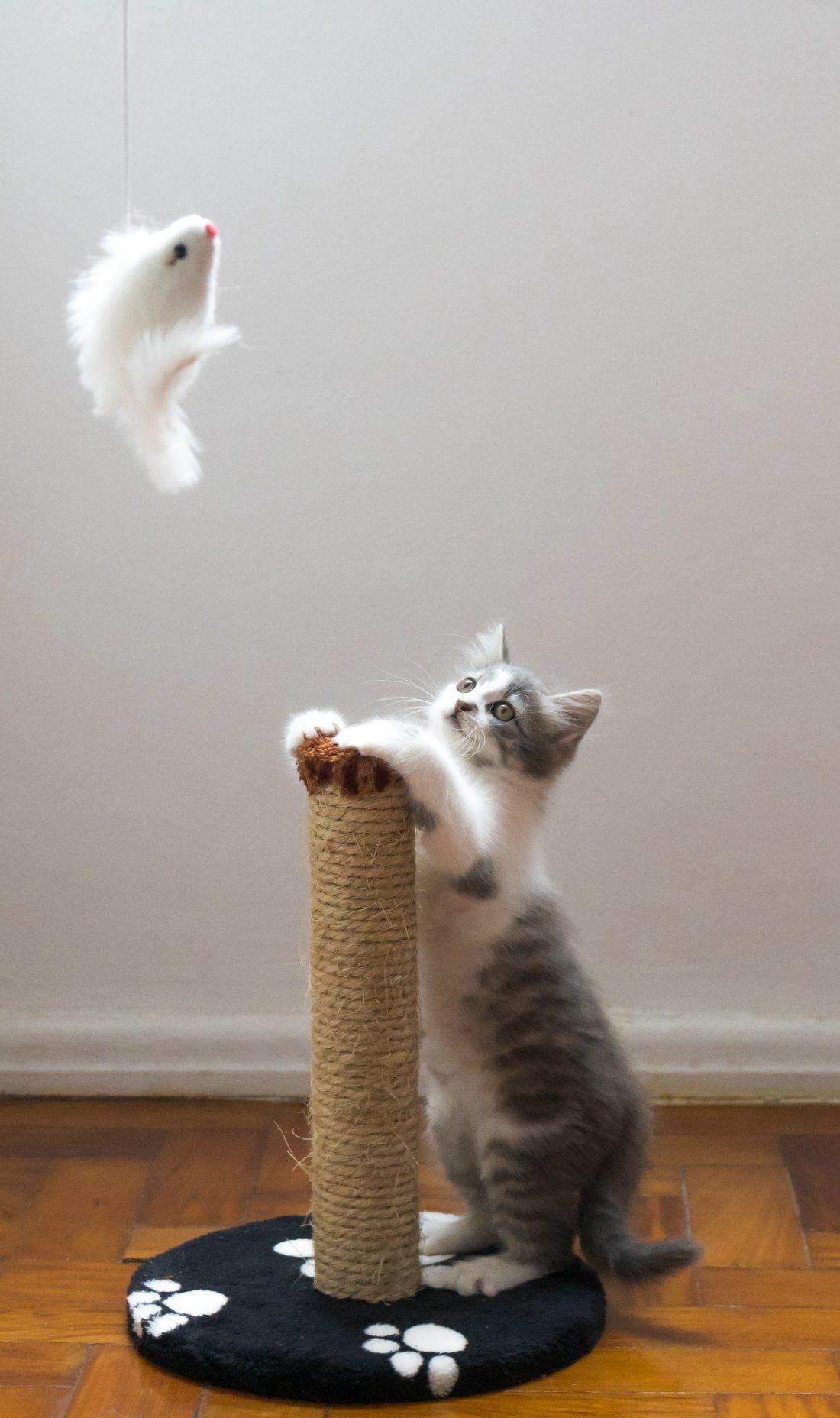 Griffoir Chat Fait Maison apprenez à votre chat à utiliser un griffoir : nos conseils